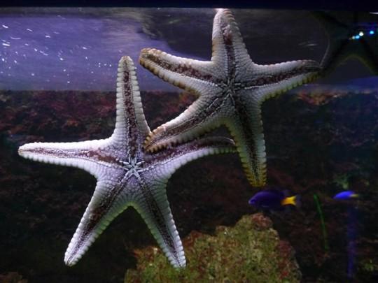 V Mořském světě...