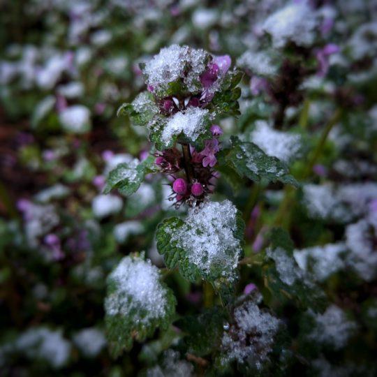 Jarní sníh